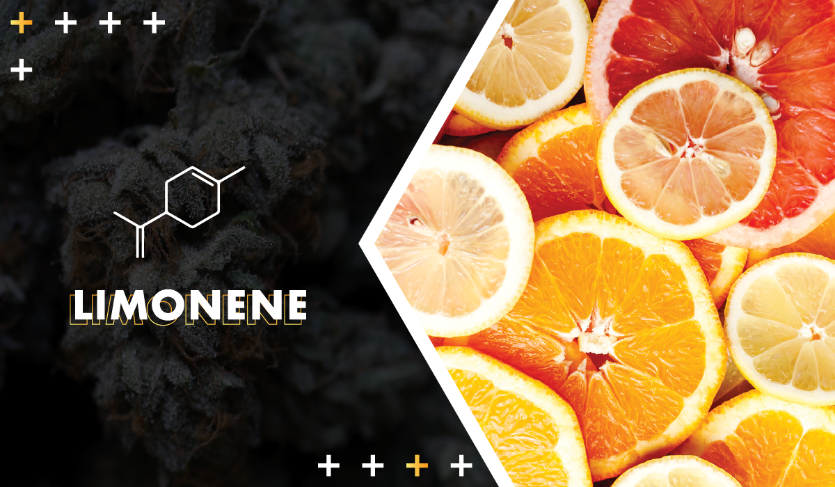 Limonene - Citrusy and sweet, limonene is thought to be uplifting and euphoric. It has also shown early promise in treating cancer, but more studies are needed to be conclusive.