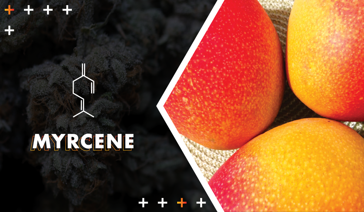 The molecular structure of the cannabis terpene myrcene.